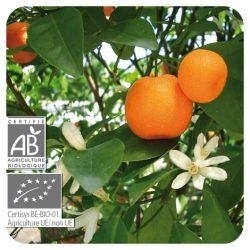 Essence Mandarinier Bio : insomnie, angoisse, stress